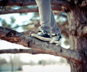tree, shoes, and all star image