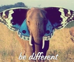 different, elephant, and butterfly image
