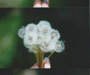 flowers, dandelion, and photography image