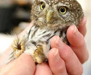 owl, animal, and adorable image