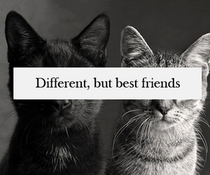 cat, friends, and different image