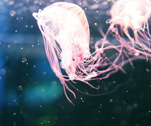 jellyfish, water, and animal image