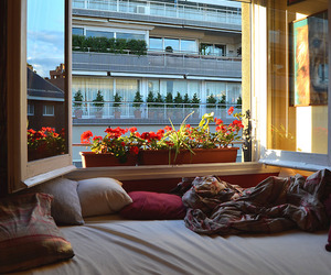 flowers, bed, and window image
