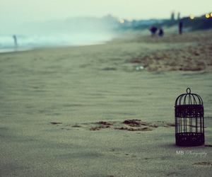 beach, bird cage, and let go image