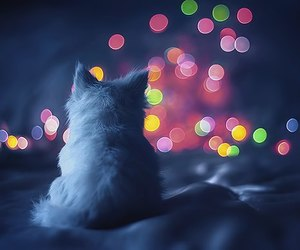 cat, light, and kitten image