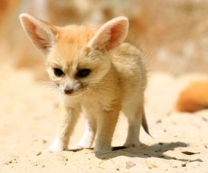 cute, fox, and animal image
