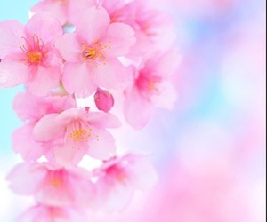 flowers, happy, and pink image