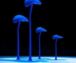 blue, champignon, and fluorescent image