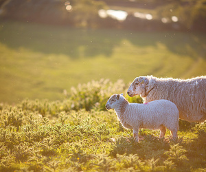 animal, fields, and grass image
