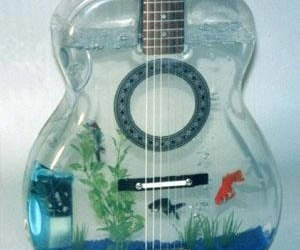 guitar, fish, and music image
