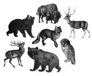 animal, bear, and deer image