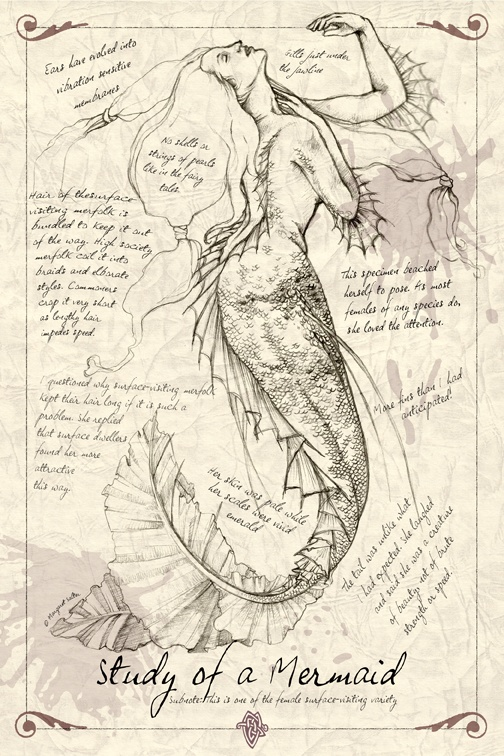 Study Of A Mermaid Mermaid On We Heart It