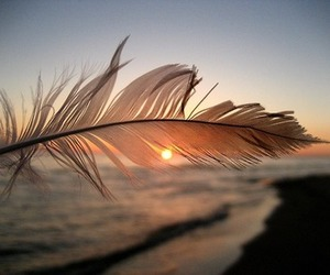 feather, beach, and sun image