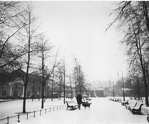 park, trees, and winter image