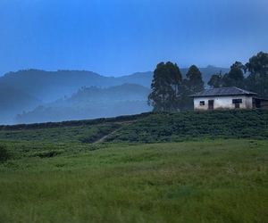 forest, mountains, and Rwanda image