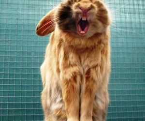 rust, blue, and cute bunny yawning image
