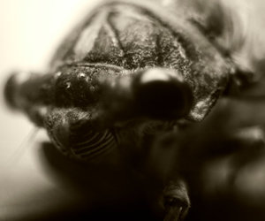 Cicada, closeup, and Deep South image