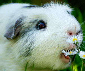 adorable, cute, and flowers image