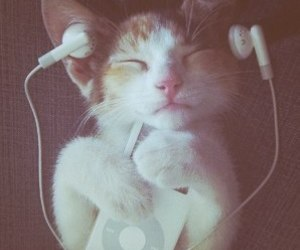 cat and music image