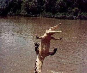 alligator, funny, and new orleans image