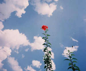 flowers, sky, and red image