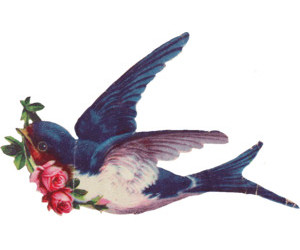 bird, d, and swallow image