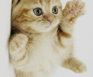 cat, dubtrackfm, and kitten image