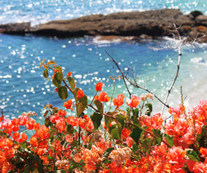 flowers, summer, and sea image