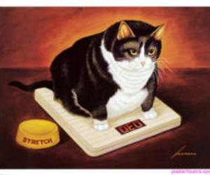 cat, fat, and scale image