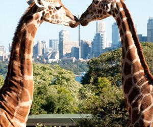giraffe, animal, and love image