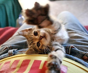 adorable, kitten, and animal image