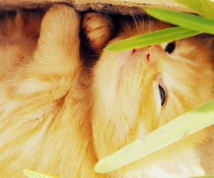 cats, tangerine, and cute image