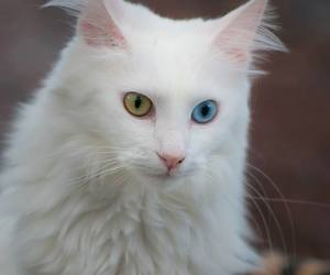 animal, cat, and blue image