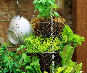 diy, garden, and herb image