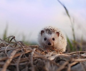 hedgehog, nature, and cute image