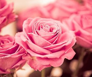 <3, rosas, and pink image