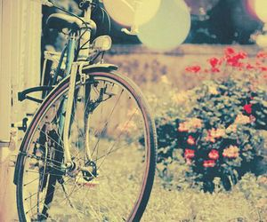 bike, bicycle, and flowers image