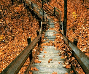 autum and stairs image
