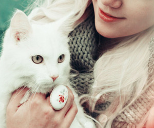 cat, blonde, and girl image