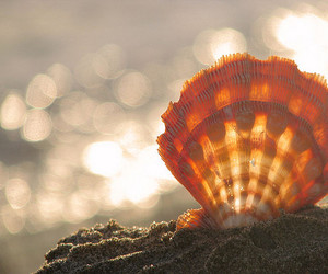 shell, beach, and sand image
