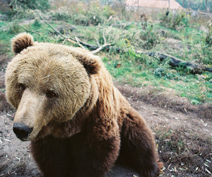 bear, nature, and vintage image