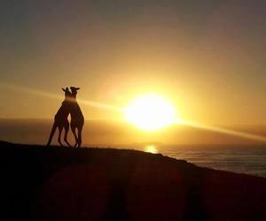 animal, cute animal, and australia image