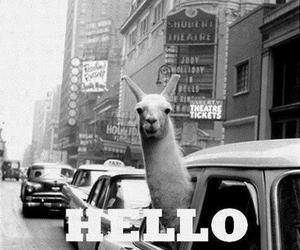 hello, car, and lama image