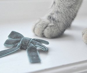 cat, bow, and paws image