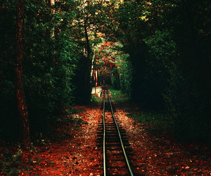 forest, nature, and railroad image