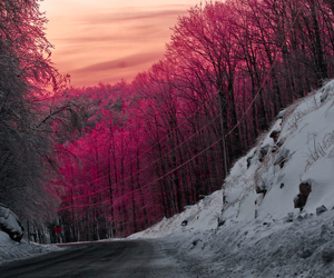 snow, pink, and tree image