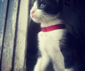 beautiful, cat, and look image