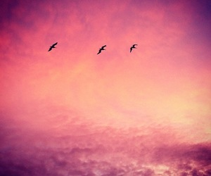 birds, pink, and silhouette image