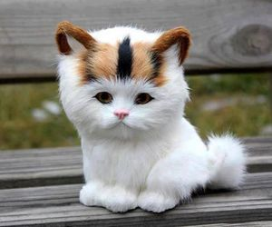 cat, lovely, and sweet image
