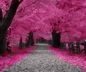pink, tree, and nature image